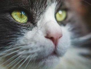 L'animalerie : un métier de passionnés pour les franchisés