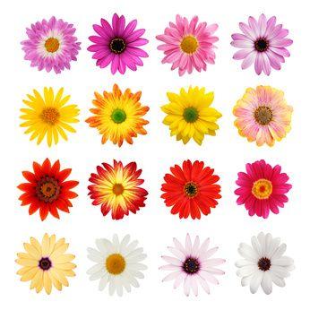 marché de la fleur