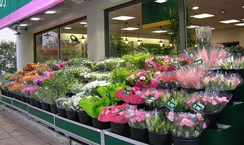 Le jardin des fleurs premi re enseigne de la fleur en for Le prix des fleurs